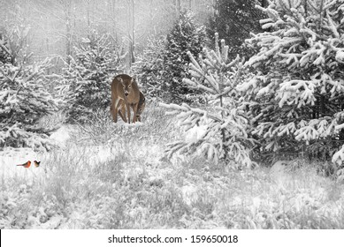 Desaturated Christmas card background with a mother deer and baby and a pair of colorful cardinals in the snow in the meadow.