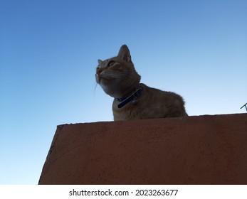 Descanso del gato esfinge en la tranquilidad de su hogar donde divisa y ve todo lo que sucede a su alrededor y se puede observar la imponente silueta tal cual fotografía de verano con hermosas vistas