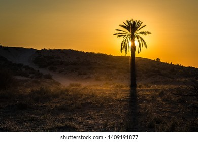 Desert activities in Douz, Kebili, Tunisia