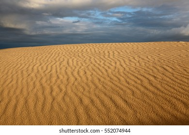 Desert with animal tracks in the sand