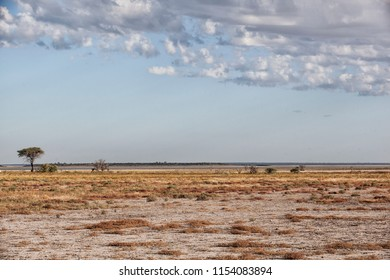 desert background or landscape with a lonesome umbrella thorn tree under a blue and cloudy sky in the endless plain of Etosha pan, Namibia, Africa