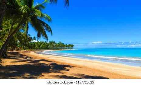 Desert Beach at Alagoas Coast