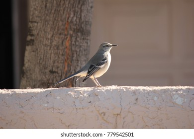 Desert birds tend to be much more abundant where the vegetation is lusher and thus offers more insects, fruit and seeds as food.  Where the Arizona cities of Phoenix, Scottsdale, Tucson and Mesa