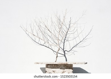 Desert branch setting on a stone slab table against a white wall.