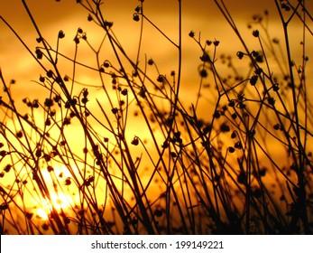 Desert brush sunset silhouette