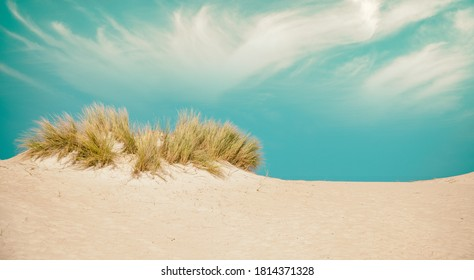 Desert bushes with sand and blue sky.