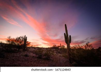 Desert Cactus at Sunrise Arizona
