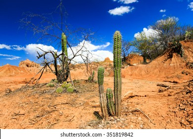desert, cactus in desert, tatacoa desert, columbia, latin america, clouds and sand, red sand in desert