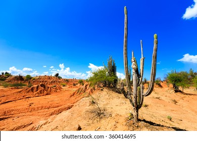 desert, cactus in desert, tatacoa desert, columbia, latin america, clouds and sand, red sand in desert, cactus