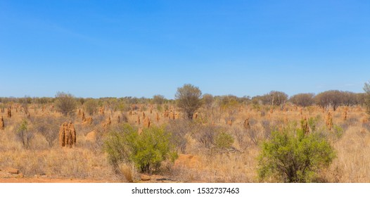desert covered with termite mounds