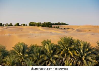 Desert dunes in Liwa oasis, Abu Dhabi, United Arab Emirates