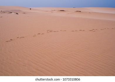 desert dunes structures