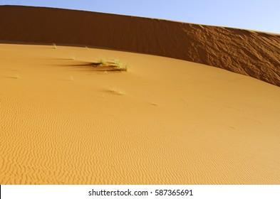 Desert, Erg Chebbi, sand dunes, Sahara, Morocco, North Africa