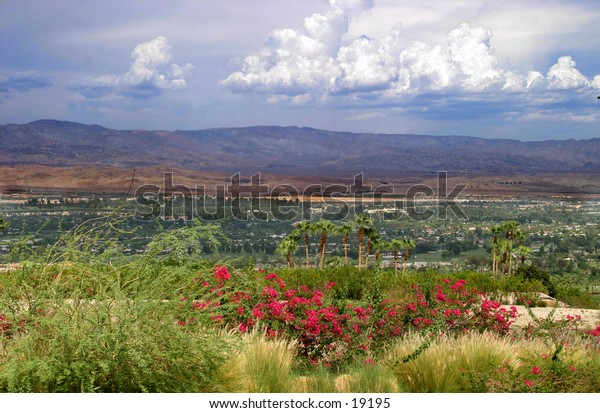 Desert flowers with mountain range in background