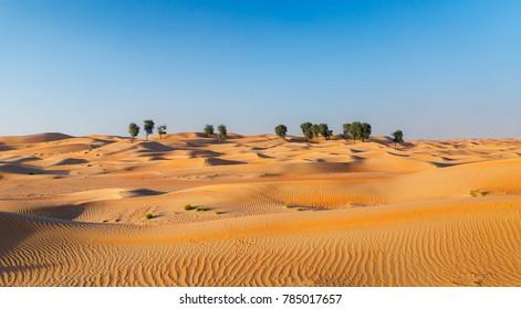 Desert Full View Panorama
