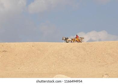 Desert Hores and Cart, Cairo, Egypt