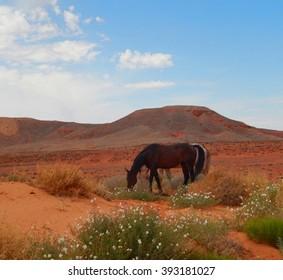 Desert Horses Grazing Monument Valley, Arizona