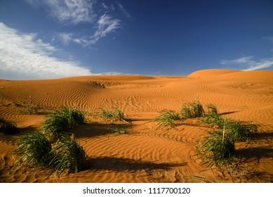 Desert in Kalmykia. Chyornye Zemli (Black Lands) Nature Reserve, Kalmykia region, Russia.