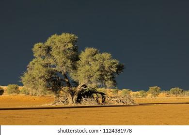 Desert landscape against a dark sky of an approaching storm, Kalahari desert, South Africa