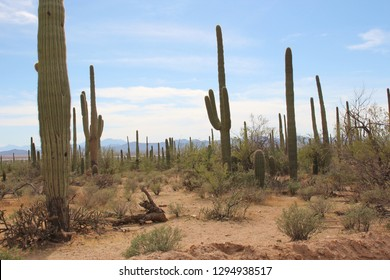 Desert landscape alongsid Bajada Loop Drive, a sandy road through the desert of Saguaro National Park West, Arizona, USA
