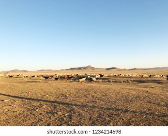 Desert landscape. Blue sky with white clouds. Summer steppe landscape. Hot desert with mountains view. Cows and goat grazing.