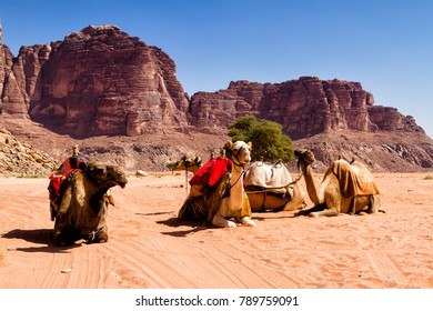 Desert landscape with camel. Sand, mountains and a desert on a Wadi Rum desert in Jordan
