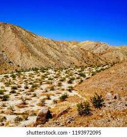 The desert landscape in the Coachella Valley Preserve.