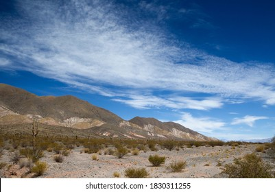 Desert landscape. The colorful hills in Los Cardones National Park in Salta, Argentina. The arid valley, sand, bushes and giant cactus Echinopsis atacamensis under a beautiful blue sky.