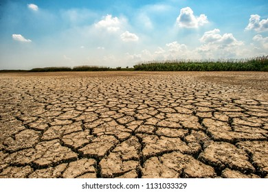 Desert landscape with cracked earth.