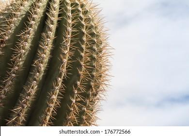 desert landscape in phoenix arizona