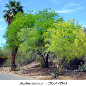 Desert landscape in Phoenix Arizona USA