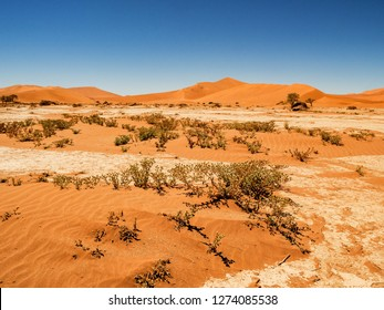 Desert landscape with red dunes and Dead Camelthorn trees and rootsat in Deadvlei, salt pan Sossusvlei. Namib Naukluft National Park, Namibia