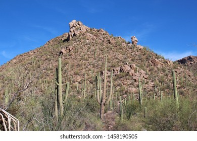 Desert landscape with Saguaro, Cholla Cacti, Ocotillo and Palo Verde on a rocky mountainside at Sus Picnic Area in Saguaro National Park, West, Arizona, USA