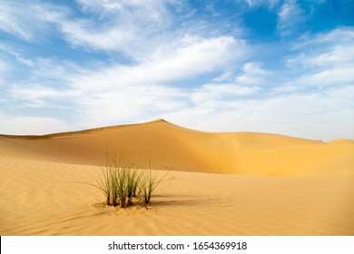Desert landscape with sand dunes and green grass bush at the foreground