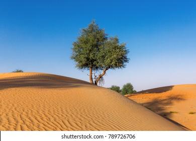 Desert Landscape with Tree