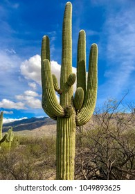 Desert Landscape at Tucson, Arizona's Saguaro National Park.