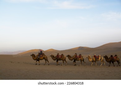 Desert landscape and walking camels before sunset