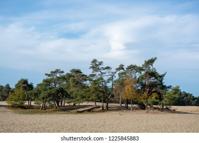 Desert landscape with yellow sand dunes, trees and plants and blue sky, National park Druinse Duinen in North Brabant, Netherlands
