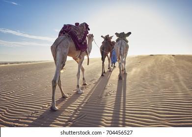 desert in Mauritania