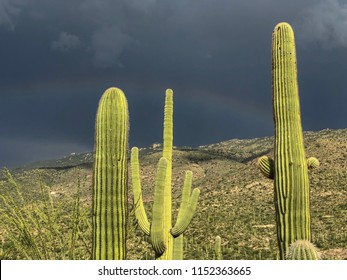Arizona's Desert Monsoon Season is Beautiful