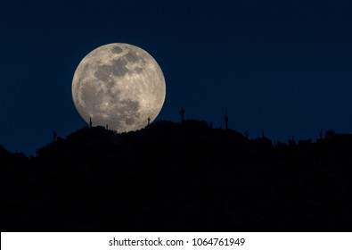 Desert Moonrise - A massive full moon rises in Scottsdale, Arizona, creating dramatic silhouettes of saguaro cacti lining a mountain top.