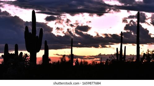 Desert Nightscape at Dusk in Arizona