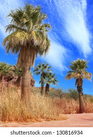 Desert Palm Oasis Phoenix Arizona