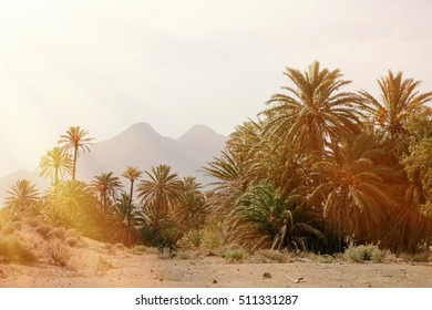 Desert place with palm trees located in Almeria (southeast Spain)