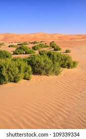 Desert plants clinging to life in the dry heat of the United Arab Emirates