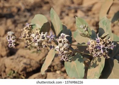 Desert Plants in Desert Environtment