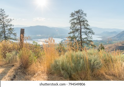 Desert plants and ponderosa pine trees on Anarchist Mountain with Osoyoos Lake and mountains in distance