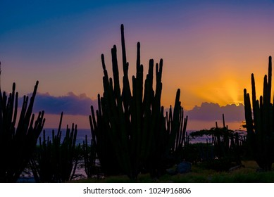 desert of prickly cactus plants at sunset with colorful sky, Aruba island Caribbean