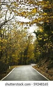 desert road in autumn