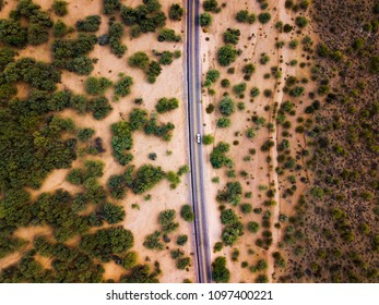 Desert road with bushes and cactuses aerial view
